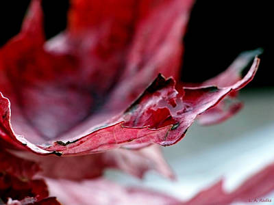 Photograph - Leaf Study II by Lauren Radke