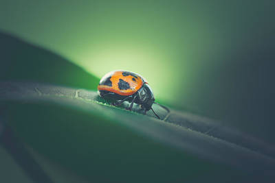 Lady Bug Photograph - Leaf Surfer by Shane Holsclaw