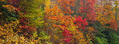 Photograph - Leaf Tapestry by Rob Hemphill