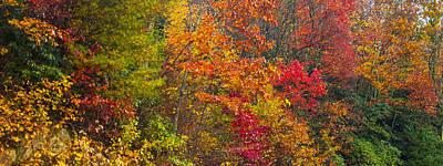 Leaf Tapestry Art Print