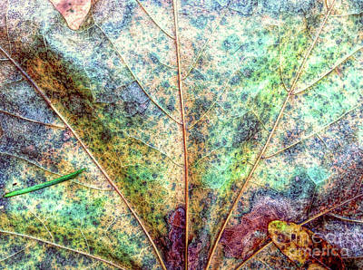 Photograph - Leaf Terrain by Todd Breitling