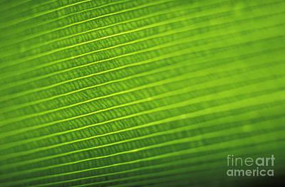 Leaf Texture Art Print by Vince Cavataio - Printscapes