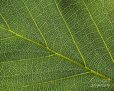 Leaf Textures Art Print by Tony Higginson