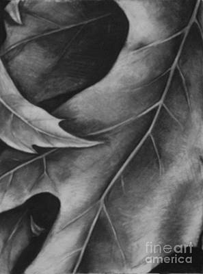 Leaf The Final Stage Art Print by Jamey Balester