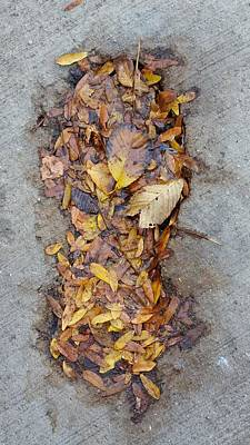 Photograph - Leaf Track by Zac AlleyWalker Lowing