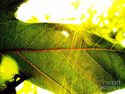 Photograph - Leaf Veins by Eve Penman