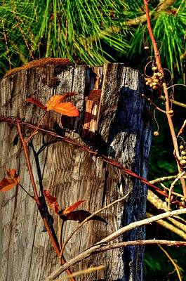 Photograph - Leaf Wire by Jerry Sodorff