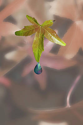 Leaf With Droplet Art Print by Peter Hill