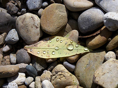 Leaf With Water Droplets In Rocks Art Print