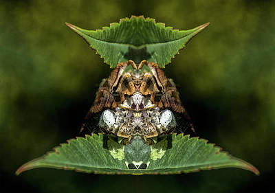 Photograph - Leaf Wrapped Cocoon by Constantine Gregory