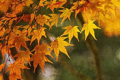 Photograph - Leaf Zen B by Rebecca Cozart