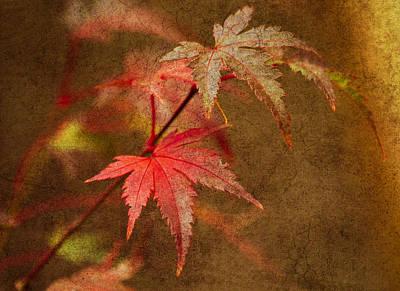 Photograph - Leaf Zen R by Rebecca Cozart