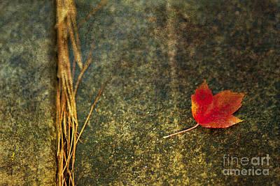 Photograph - Leaf Zen S by Rebecca Cozart