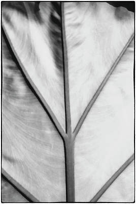 Photograph - Leaf1 by John Hansen