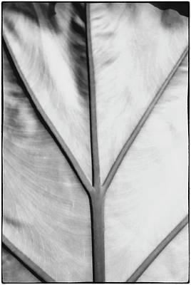 Leaf1 Art Print
