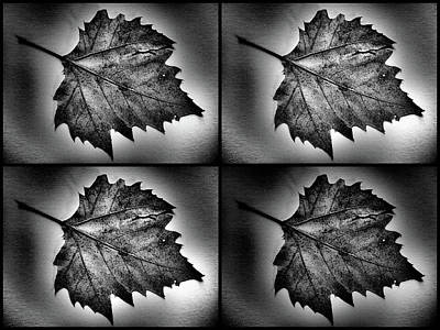 Photograph - Leafing by Tom Druin