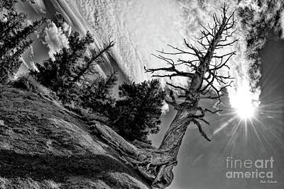 Photograph - Leafless Life by Blake Richards