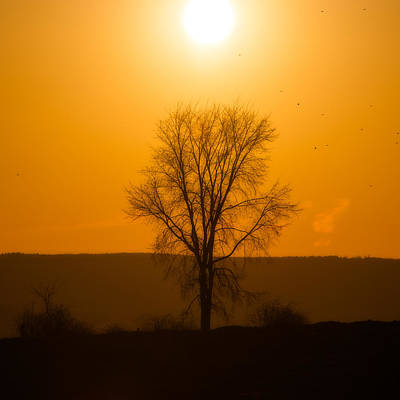Photograph - Leafless Sunset Silhouette by Chris Bordeleau
