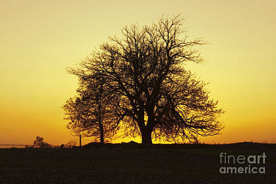 Photograph - Leafless Tree Against Sunset Sky by Sharon Foelz