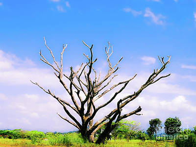 Photograph - Leafless Tree by Camille Pascoe