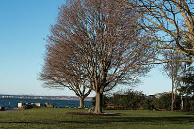 Photograph - Leafless Trees At Marine Park by Tom Cochran