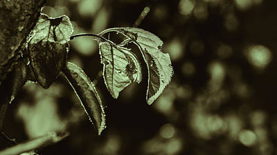 Photograph - Leafs Background In Dark Tone by Jacek Wojnarowski