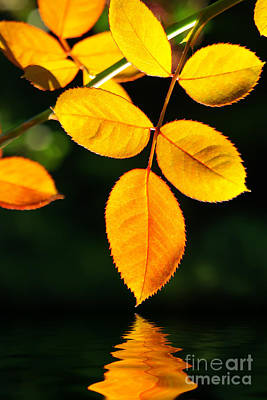 Autumn Leaf Photograph - Leafs Over Water by Carlos Caetano