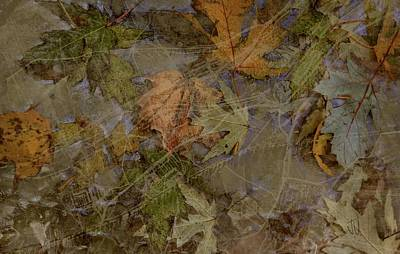 Photograph - Leafscape by Jim Vance