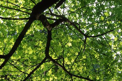 Leafy Canopy - Ventana Wilderness Art Print by Soli Deo Gloria Wilderness And Wildlife Photography