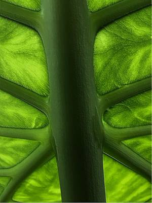 Digital Art - Leafy Framework by Michael Hurwitz