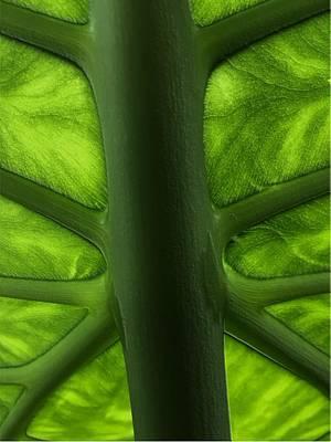 Digital Art - Leafy Framework by Michael Hurwitz