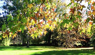 Photograph - Leafy Glade by Nareeta Martin