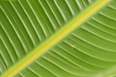 Photograph - Leafy Green by Christi Kraft
