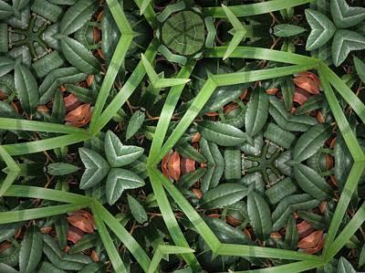 Photograph - Leafy Greens by Sylvan Adams