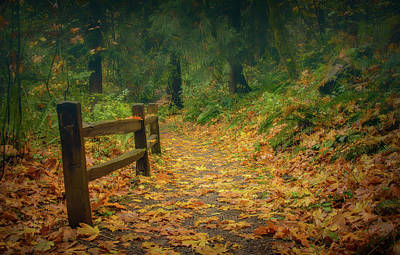 Photograph - Leafy Path by Don Schwartz