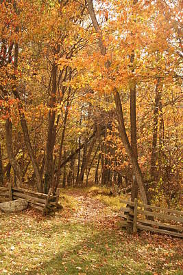 Photograph - Leafy Path by Vickie Bushnell