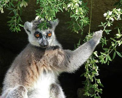 Photograph - Leafy Patterned Lemur by Margaret Saheed