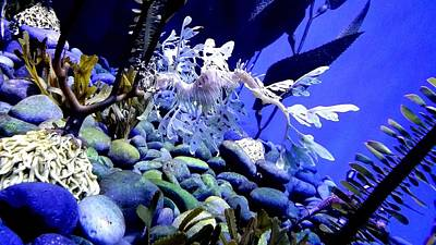 Photograph - Leafy Sea Dragon by Kelly Mills