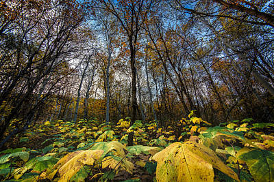Leafy Yellow Forest Carpet Art Print