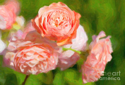 Leander English Rose Art Print by Verena Matthew