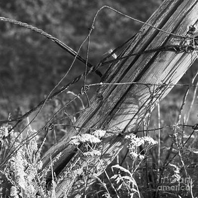 Leaning Farm Fence Post Amongst Weeds In Evening Sun Art Print by Gordon Wood