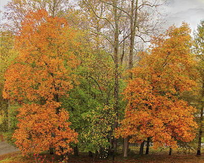 Photograph - Leaning Into Autumn by Bellesouth Studio