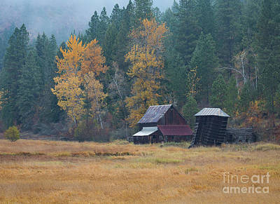 Photograph - Leaning Into Winter by Idaho Scenic Images Linda Lantzy
