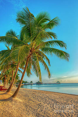 Photograph - Leaning Palm Trees by David Zanzinger