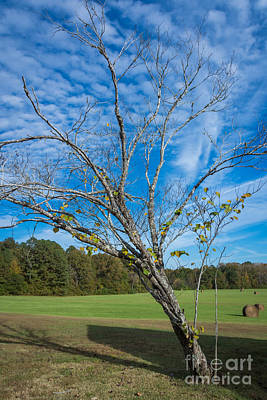 Leaning Tree Enhanced - Natchez Trace Art Print