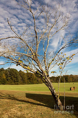 Leaning Tree - Natchez Trace Art Print by Debra Martz