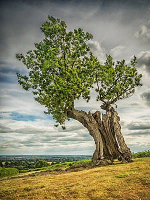 Photograph - Leaning Tree by Nick Bywater