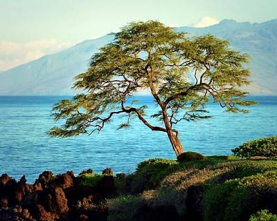 Photograph - Leaning Tree On Maui by Patricia Strand
