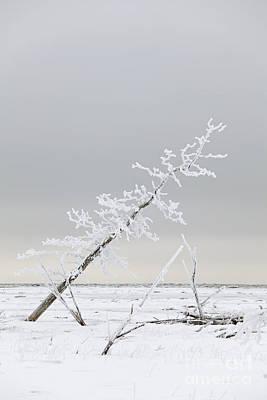 Leaning Tree Art Print by Tim Grams