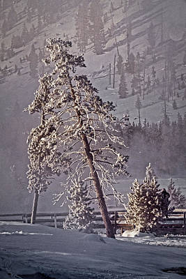 Photograph - Leaning Tree - Yellowstone by Stuart Litoff